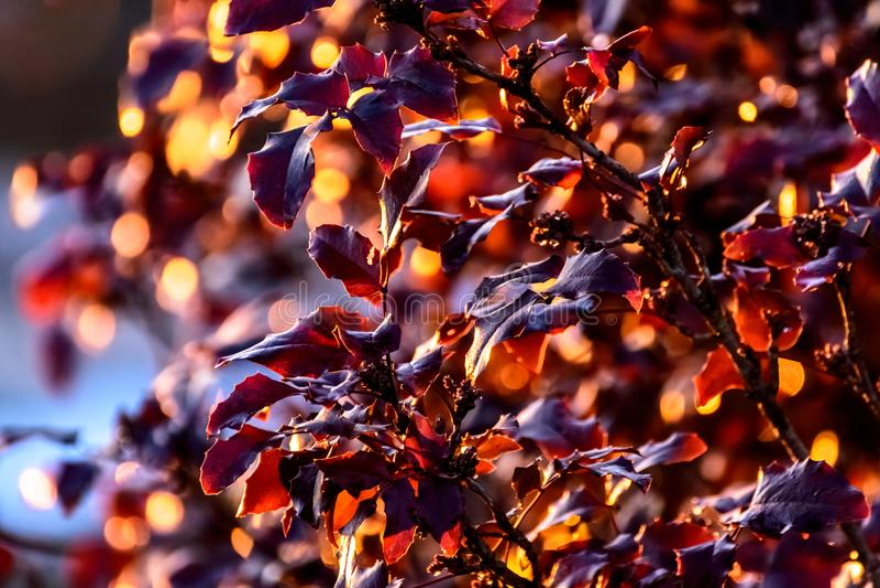 O banho da luz solar fotografia de stock royalty free