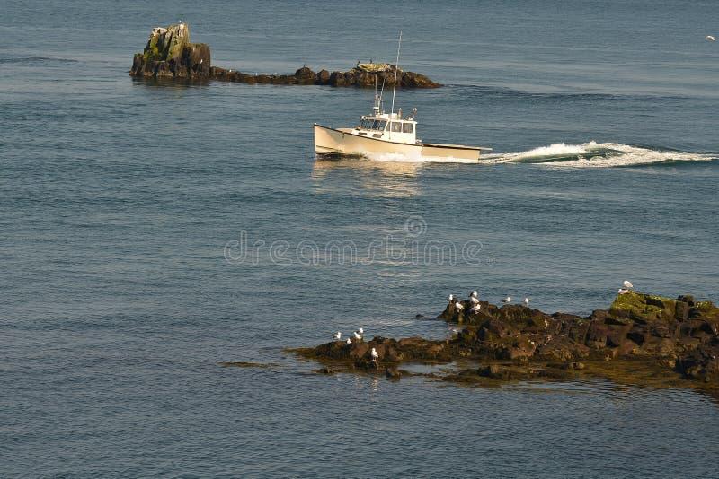 O barco de entrada da lagosta navega entre rochas foto de stock