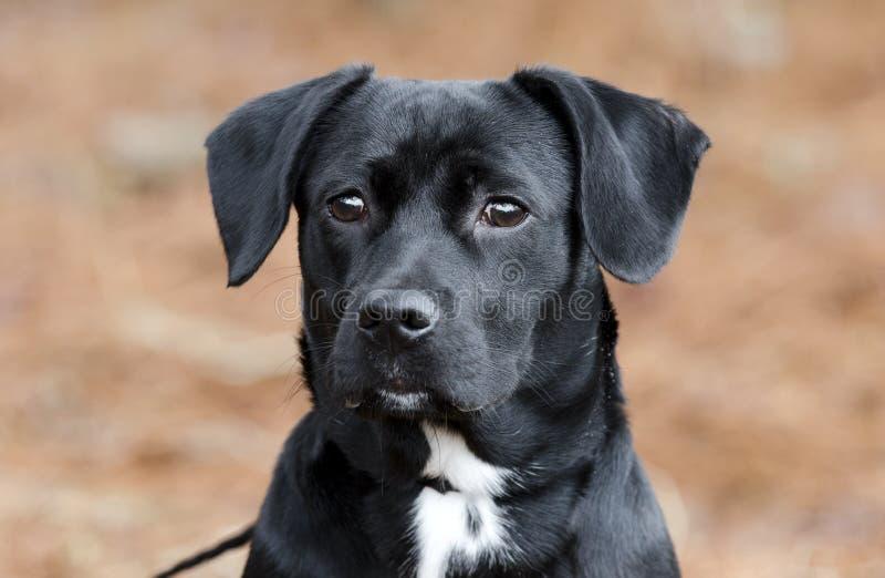 O bassê preto bonito do lebreiro misturou a vira-lata do cão da raça imagens de stock royalty free