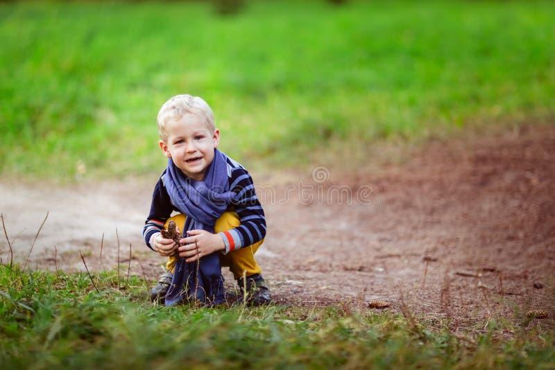 O bebê do outono que joga com cones, recolhe cones nas madeiras foto de stock royalty free