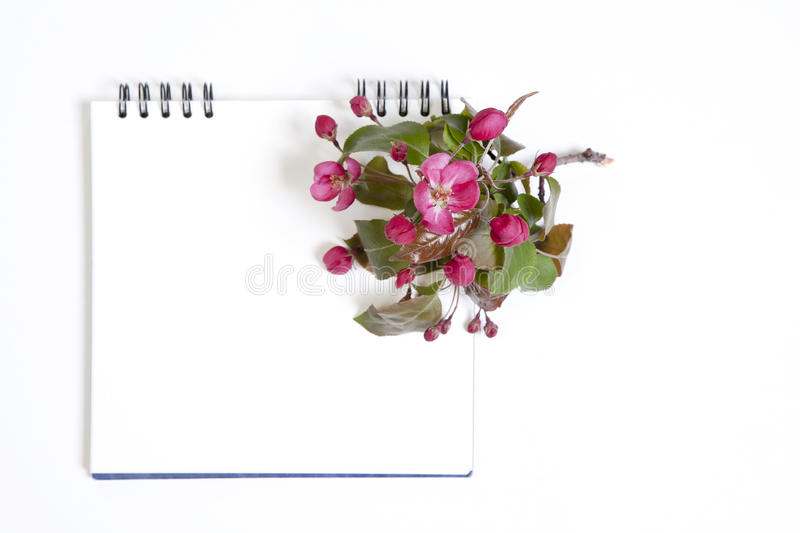 O bloco de notas com flores de uma Apple-árvore do niedzwetzkyana Dieck do Malus de Nedzvetsky isolada no fundo branco fotos de stock