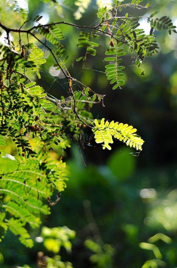 O borrão da luz solar do bokeh do verde da natureza sae do fundo foto de stock