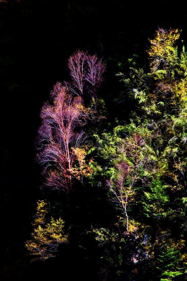 O bosque colorized na luz do sol fotos de stock royalty free