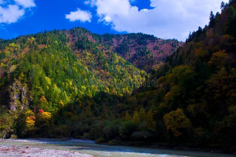 O bosque colorized no céu azul fotografia de stock