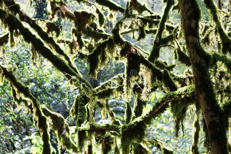 O bosque da árvore do teixo e do bookswood é um local natural na vila do anfitrião, Sochi, Krasnodar Krai, Rússia imagens de stock