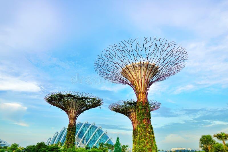 O bosque de Supertree imagens de stock