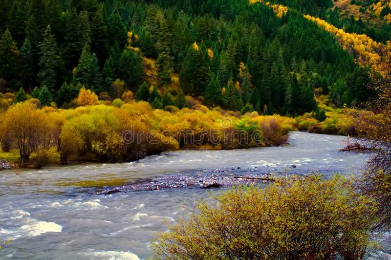 O bosque e o ribeiro colorized imagem de stock royalty free