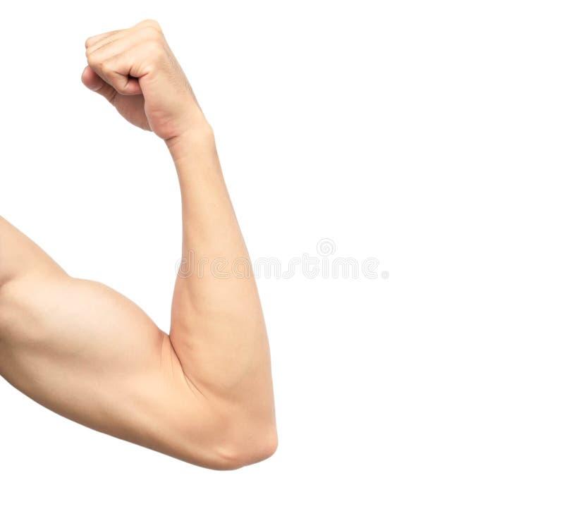 O braço saudável asiático do ` s dos homens muscles no fundo branco fotografia de stock royalty free