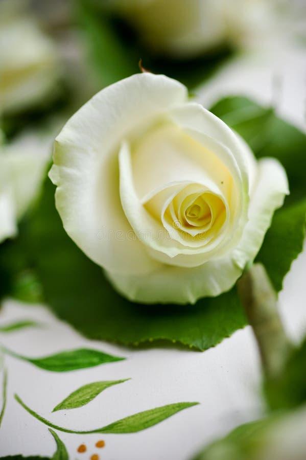 O branco bonito levantou-se na flor fotografia de stock royalty free