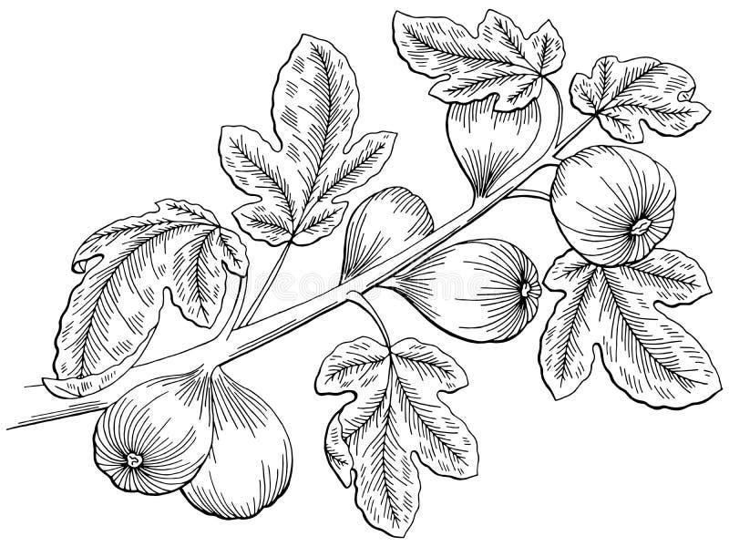 O branco gráfico do preto da árvore do figo isolou a ilustração do esboço ilustração stock