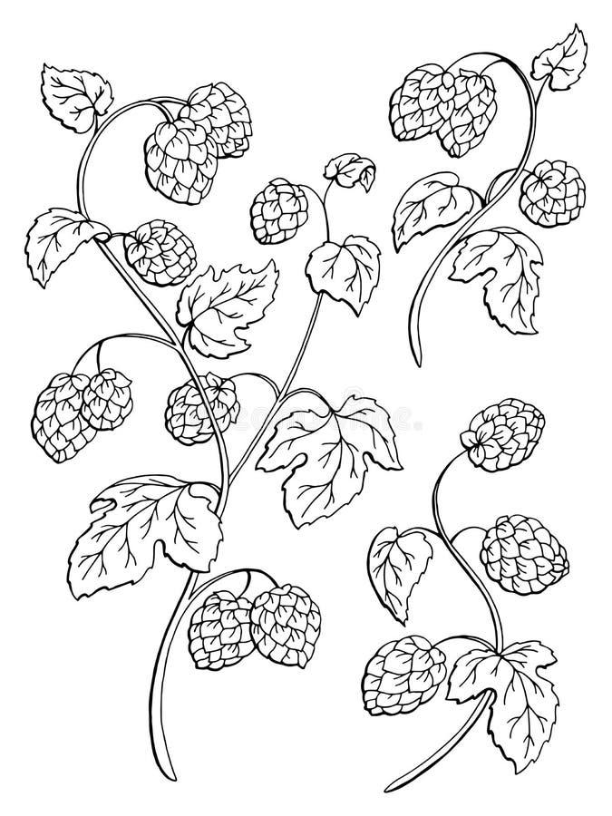 O branco gráfico do preto do arbusto da planta dos lúpulos isolou a ilustração do esboço ilustração stock