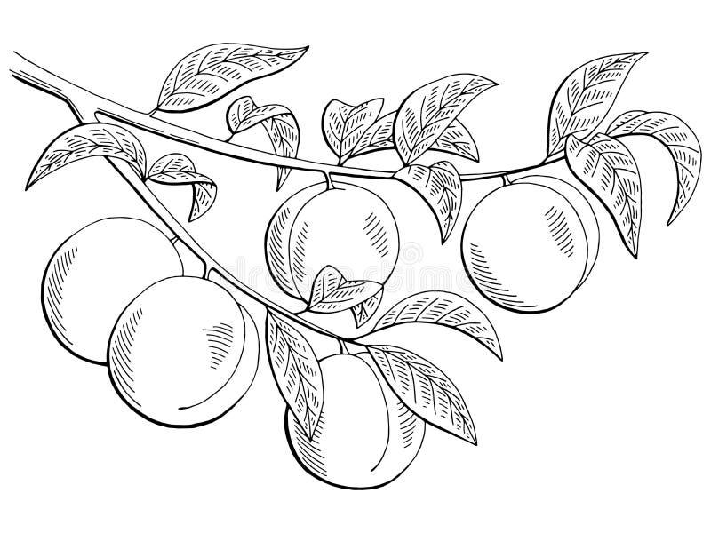O branco gráfico do preto do ramo do fruto do pêssego isolou a ilustração do esboço ilustração do vetor