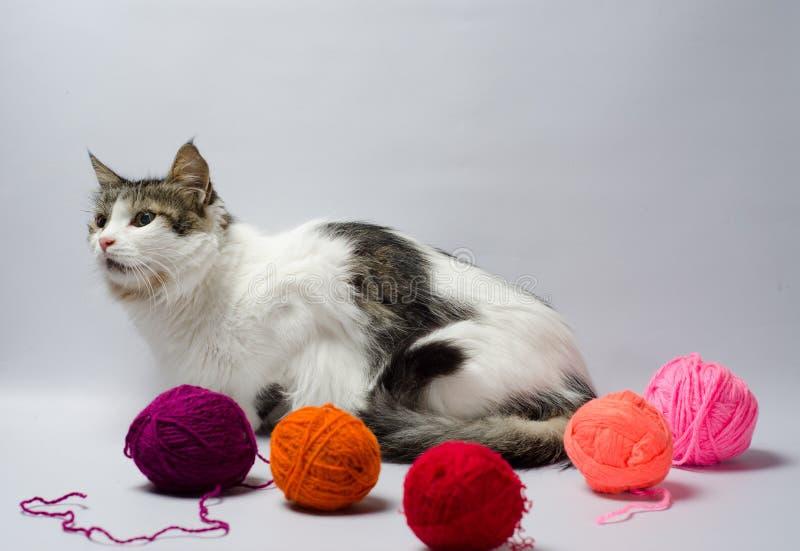 O branco manchou o gato macio entre bolas multi-coloridas do fio de lãs foto de stock royalty free