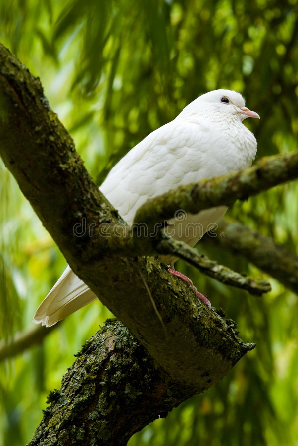 O branco mergulhou em uma árvore fotos de stock