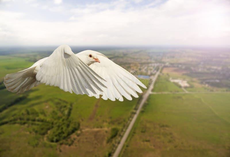 O branco mergulhou voando sobre a cidade e a estrada com ponto quente ensolarado imagens de stock royalty free