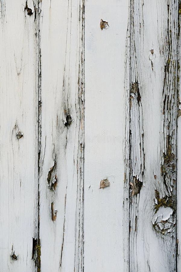 O branco pintou o fundo de madeira da cerca com lotes da textura e dos testes padrões na grão de madeira foto de stock royalty free