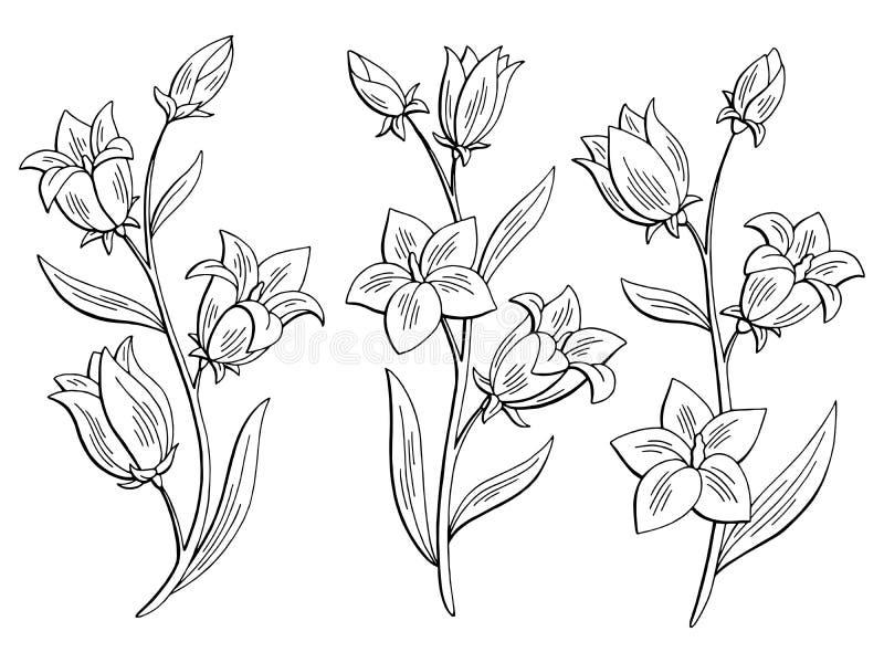 O branco preto gráfico da flor da campainha isolou vetor ajustado da ilustração do esboço ilustração stock