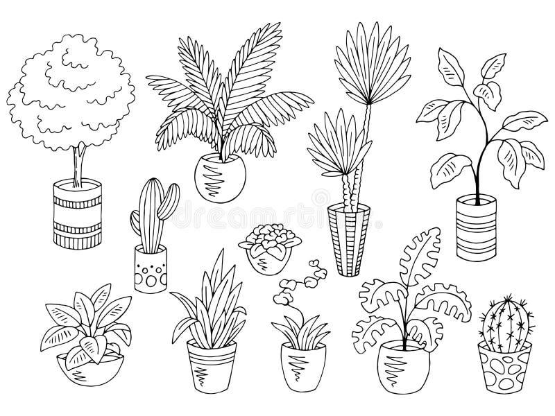 O branco preto gráfico da flor das plantas da casa isolou vetor ajustado da ilustração do esboço ilustração stock