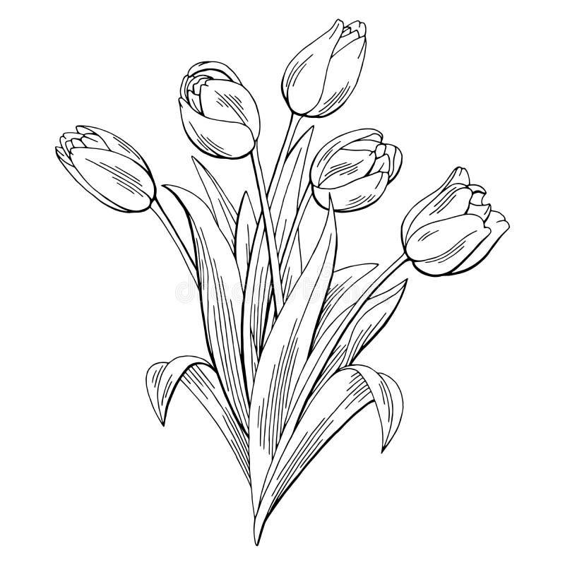O branco preto gráfico da flor da tulipa isolou o vetor da ilustração do esboço do ramalhete ilustração do vetor