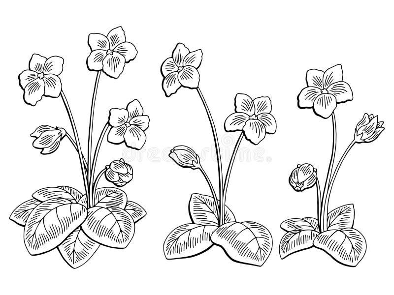 O branco preto gráfico da flor violeta isolou a ilustração do esboço ilustração do vetor