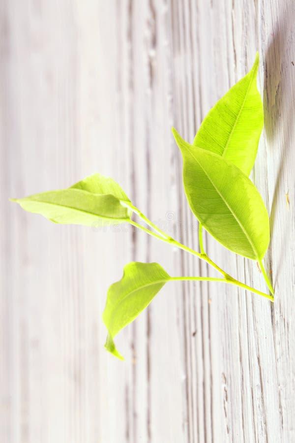 O broto verde cresce através de uma quebra em uma cerca fotografia de stock
