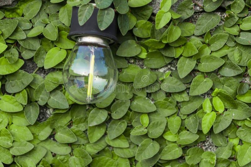 O bulbo é montado em uma parede do cimento e tem uma folha verde como fotos de stock