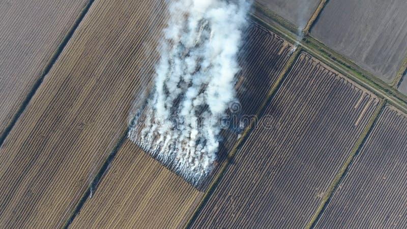 O burning da palha do arroz nos campos Fume do burning da palha do arroz nas verificações Fogo no campo foto de stock royalty free