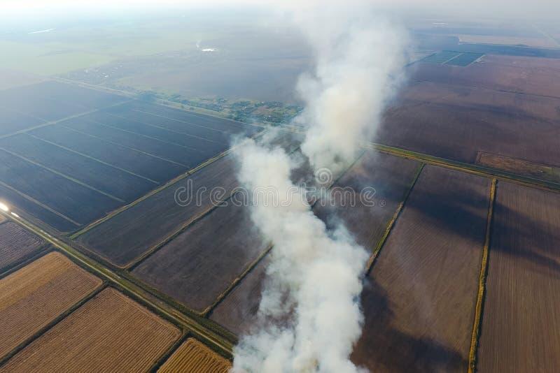 O burning da palha do arroz nos campos Fume do burning da palha do arroz nas verifica??es Fogo no foto de stock