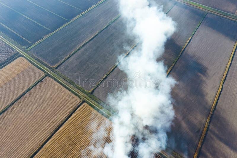 O burning da palha do arroz nos campos Fume do burning da palha do arroz nas verifica??es Fogo no imagens de stock
