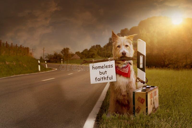 O cão abandonado senta-se amarrado com a mala de viagem na estrada imagens de stock