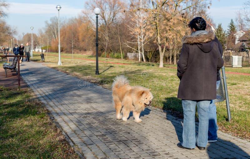 O cão amigável da comida de comida está andando no parque e obtém familiar com os povos fotografia de stock royalty free