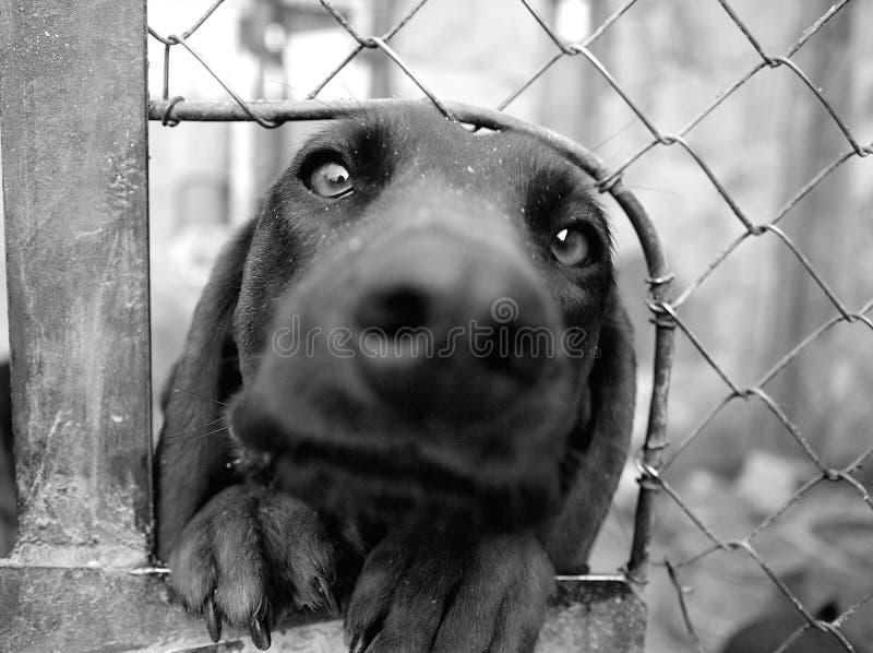 O cão bávaro faz a cara engraçada imagens de stock