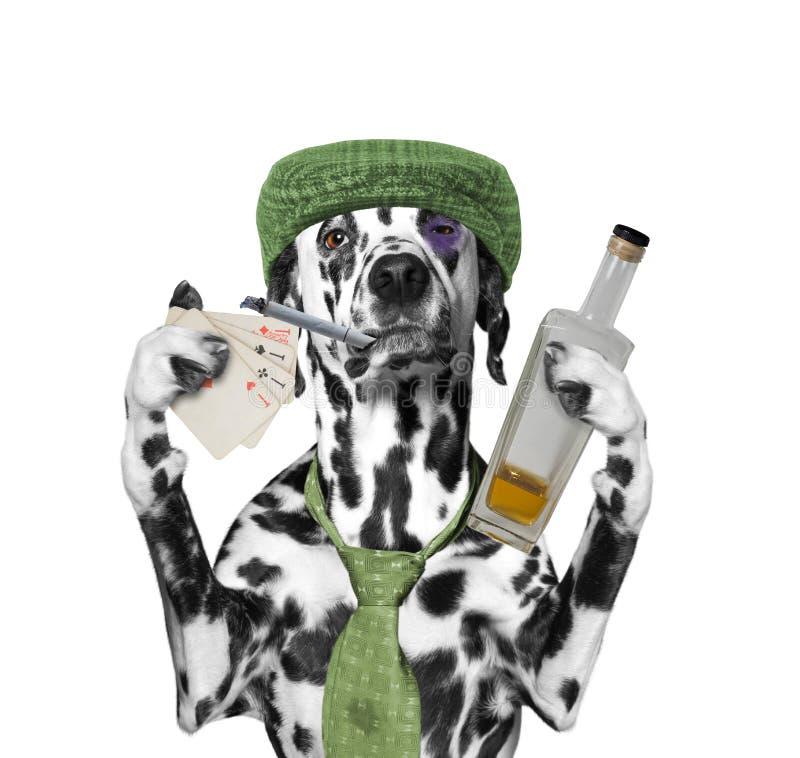 O cão bêbado está jogando e está fumando imagens de stock royalty free