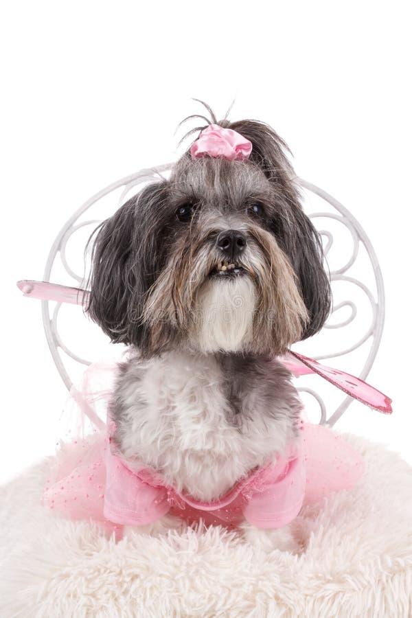 O cão bonito vestiu-se acima como uma fada para Dia das Bruxas imagem de stock
