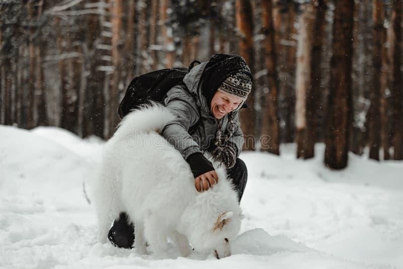 O cão branco engraçado está andando no inverno em uma floresta nevado fotos de stock royalty free