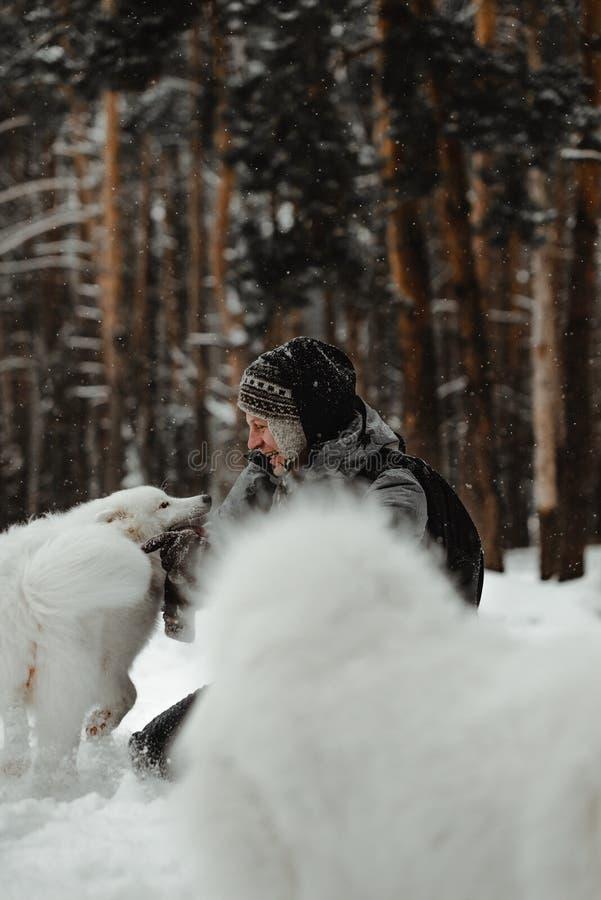 O cão branco engraçado está andando no inverno em uma floresta nevado imagem de stock royalty free