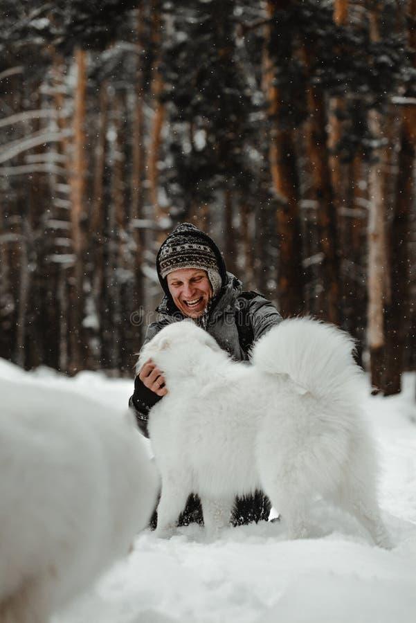 O cão branco engraçado está andando no inverno em uma floresta nevado imagens de stock
