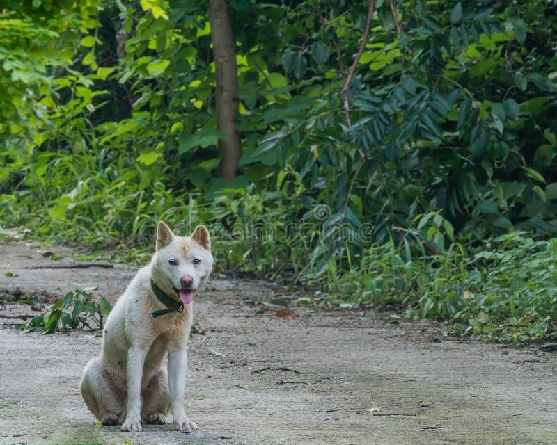 O cão branco sujo que senta-se no pavimentado montou fotos de stock royalty free