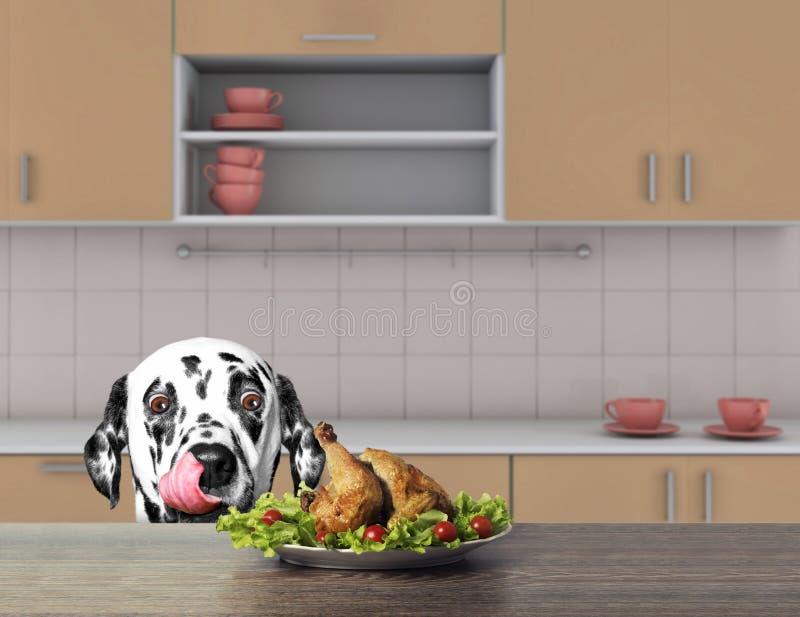 O c?o dalmatian bonito est? indo comer algum para chiken da tabela 3d rendem fotografia de stock