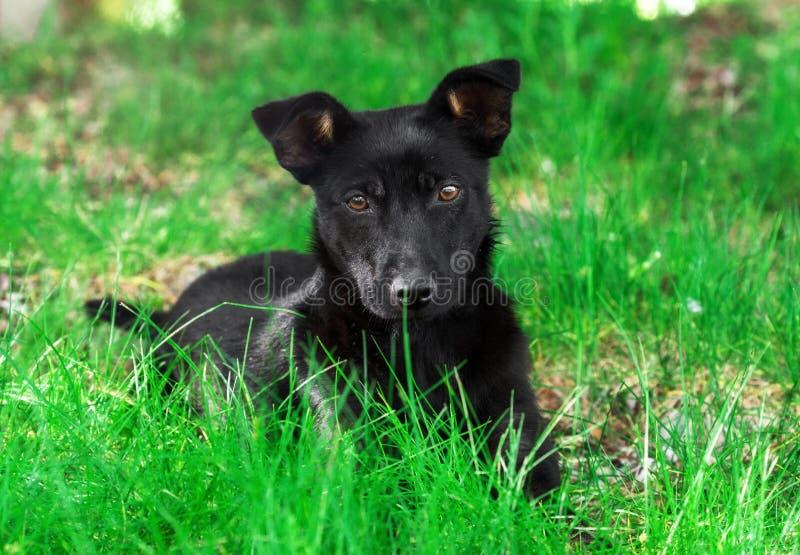 O cão de cachorrinho adorável na grama olha diretamente na câmera foto de stock