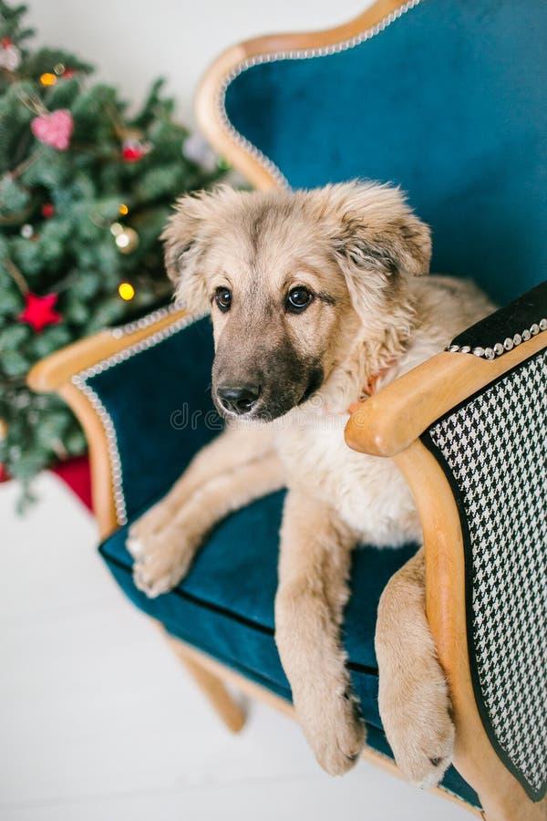 O cão de cachorrinho bonito próximo decorou a árvore de Natal no estúdio fotos de stock