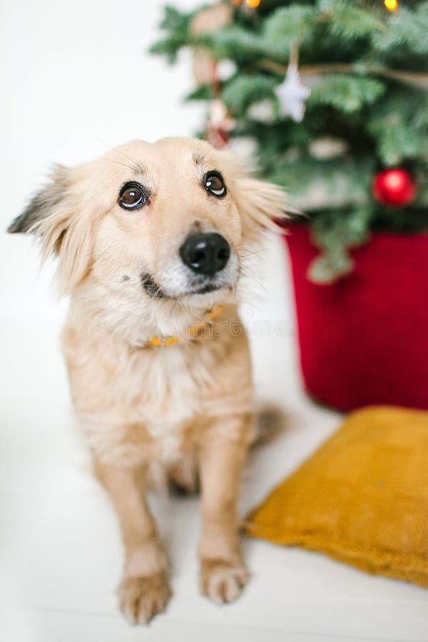 O cão de cachorrinho bonito próximo decorou a árvore de Natal no estúdio fotos de stock royalty free