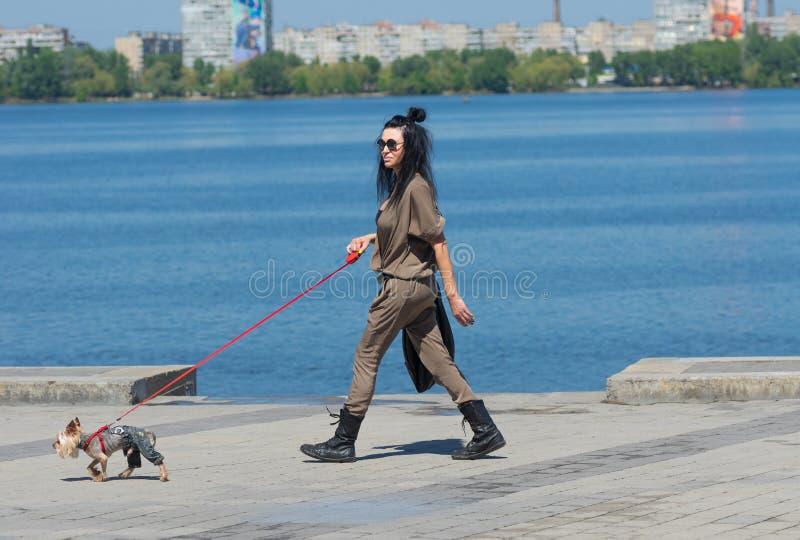 O cão de Dandy Yorkshire Terrier que veste calças de brim conduz a mulher elegante em uma terraplenagem do rio de Dnepr na cidade imagem de stock