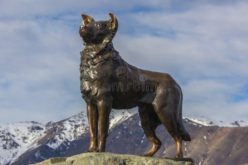 O cão de McKenzie foto de stock royalty free