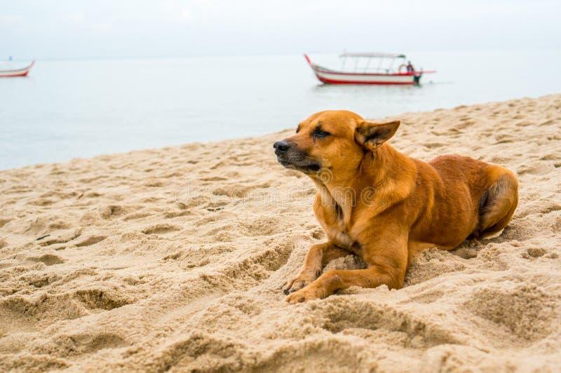 O cão de rasgo encheu-se com as emoções pela praia imagens de stock