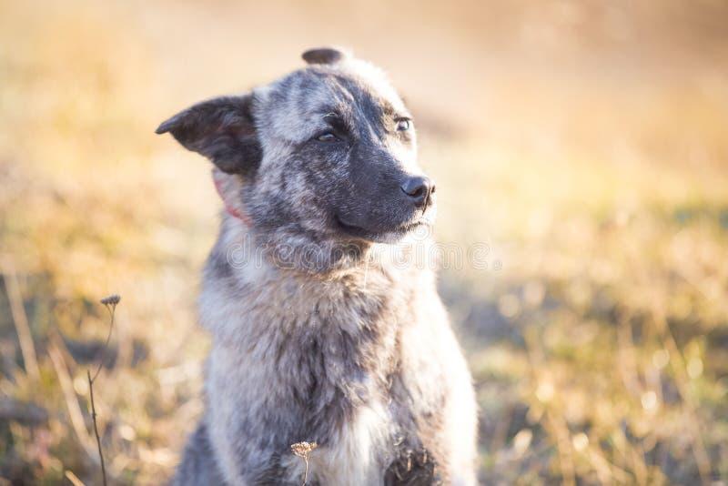 O cão disperso adotado feliz, adota não compra fotos de stock