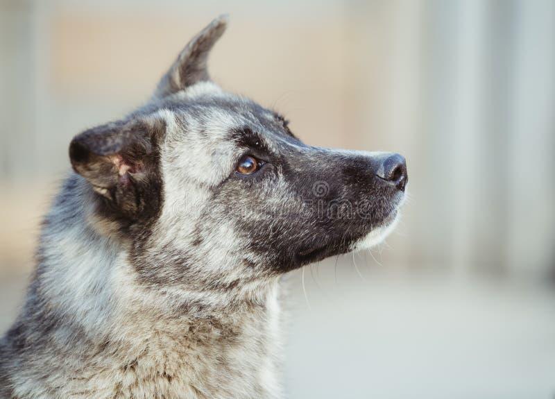 O cão disperso adotado feliz, adota não compra imagens de stock