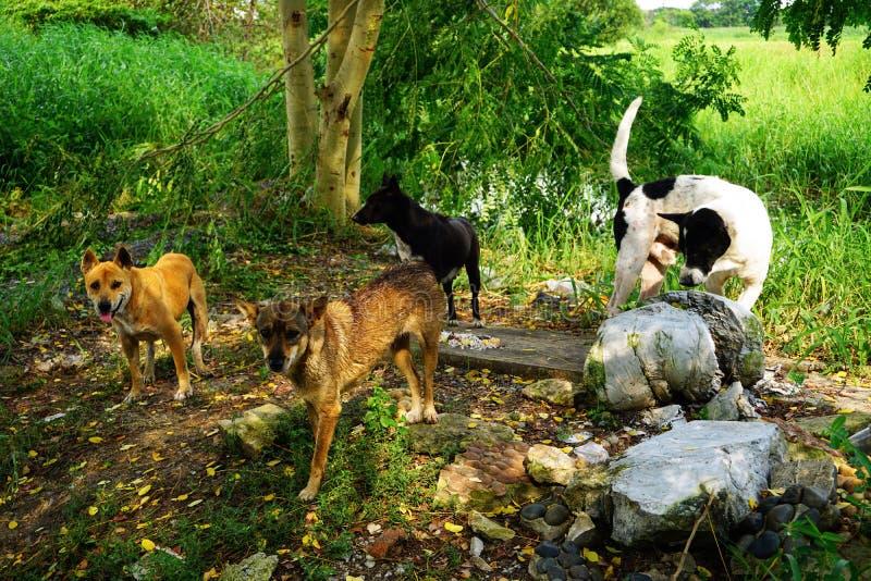 O cão disperso com fome está comendo fotografia de stock