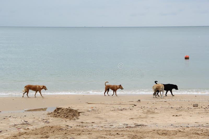 O cão disperso está andando na praia uma fotografia de stock