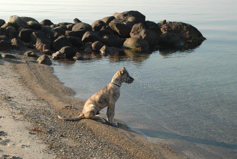 O cão do youg e o mar fotos de stock